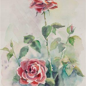 Roosipere, akvarell, 56×38 cm