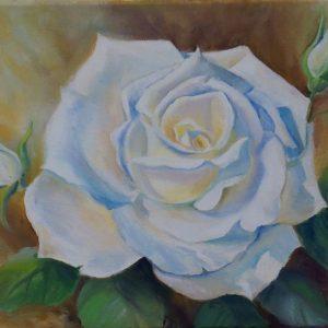 Valge roos, õli, 35×27 cm